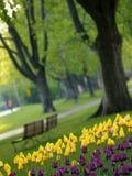 Parque hermoso en resorte Imagenes de archivo