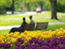 Parque hermoso en resorte Fotografía de archivo libre de regalías