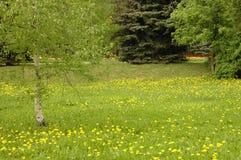 Parque. Hierba verde. Resorte. Foto de archivo