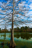 Parque Houston Texas de Tomball Burroughs Imagens de Stock