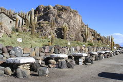 Parque Incahuasi, Salar De Uyuni Bolivia Stock Image