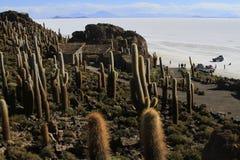 Parque Incahuasi, Salar De Uyuni Bolivia Royalty Free Stock Photo