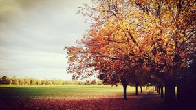 Parque Inglaterra do campo da cidade Imagem de Stock