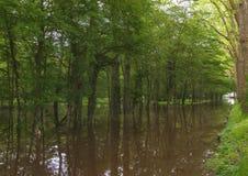 Parque inundado fotografia de stock