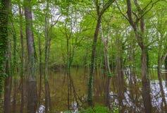 Parque inundado foto de stock royalty free