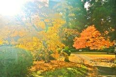 Parque japonés en otoño en Tokio, Japón Fotografía de archivo libre de regalías