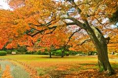 Parque japonés en otoño en Tokio, Japón Fotos de archivo libres de regalías