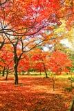Parque japonés en otoño en Tokio, Japón Imagen de archivo libre de regalías