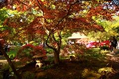 Parque japonês em Haia Foto de Stock Royalty Free