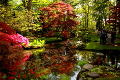 Parque japonês em Haia Fotos de Stock