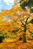 Parque japonês no outono no Tóquio, Japão Foto de Stock