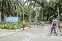 Parque Jardim DA Luz, Σάο Πάολο SP Βραζιλία στοκ εικόνα με δικαίωμα ελεύθερης χρήσης