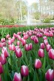 Parque Keukenhof da flor Imagem de Stock