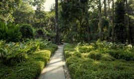 Parque lage在里约热内卢 库存照片