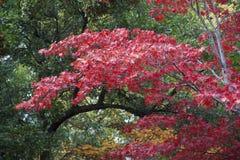 Parque Lithia Ashland, Oregon foto de stock royalty free