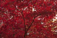 Parque litia Ashland, Oregon Imagen de archivo