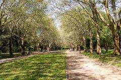Parque Lviv Ucrânia de Stryiskyi Imagem de Stock