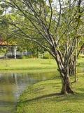 Parque na margem Fotografia de Stock