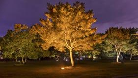 Parque na noite Imagem de Stock Royalty Free