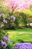 Parque na primavera imagens de stock royalty free