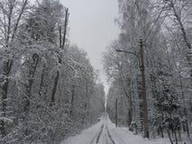Parque na vila de Komarovo Imagem de Stock Royalty Free
