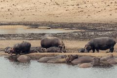 Parque nacional África do Sul de Kruger fotografia de stock