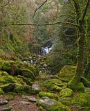 Parque nacional 07 de Killarney Foto de Stock