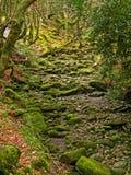 Parque nacional 10 de Killarney Foto de Stock Royalty Free