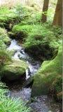 Parque nacional Foto de Stock Royalty Free
