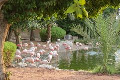 Parque nacional Abu Dhabi dos manguezais do flamingo em Emiratos Árabes Unidos foto de stock royalty free
