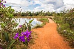 Parque Nacional Agua Mineral. Ilha Meditacao. Brazil, Brasila royalty free stock photo