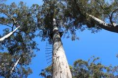 Parque nacional Aus del oeste de Warren del árbol bicentenario fotos de archivo libres de regalías