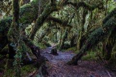 Parque Nacional av Queulat, Austral Carretera, huvudväg 7, Chile Royaltyfria Foton