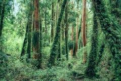 Parque Nacional Chiloe Stock Images