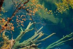 Parque nacional China de Jiuzhaigou Imagem de Stock Royalty Free