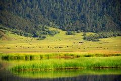 Parque nacional China de Pudachu Fotografia de Stock Royalty Free