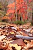 Parque nacional Coreia de Gyeryongsan imagem de stock royalty free