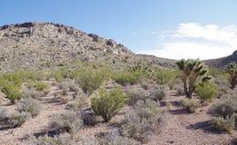 Parque nacional da garganta vermelha da rocha do parque nacional da garganta da rocha Foto de Stock Royalty Free