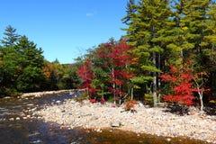 Parque nacional da montanha branca Fotografia de Stock Royalty Free