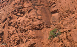 Parque nacional da rocha vermelha, Sedona, o Arizona Foto de Stock Royalty Free