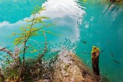 Parque nacional Dalmácia dos lagos Plitvice, Croácia Imagens de Stock Royalty Free