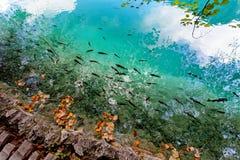 Parque nacional Dalmácia dos lagos Plitvice, Croácia Imagem de Stock Royalty Free