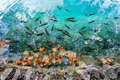 Parque nacional Dalmácia dos lagos Plitvice, Croácia Imagem de Stock