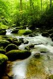 Parque nacional das grandes montanhas de Smokey Foto de Stock