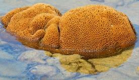 Parque nacional das ilhas de Similan Fotos de Stock Royalty Free