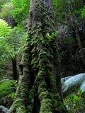 Parque nacional das montanhas azuis, UNESCO, Austrália Imagem de Stock
