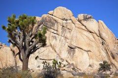 Parque nacional de árvore de Joshua da escalada da rocha Fotografia de Stock