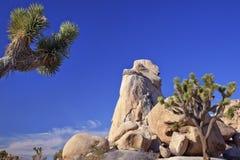 Parque nacional de árvore de Joshua da rocha Imagens de Stock Royalty Free