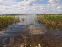 Parque nacional de Ķemeri (Letónia) Fotografia de Stock Royalty Free