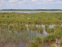 Parque nacional de Ķemeri (Letónia) Imagens de Stock